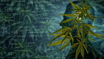 What is Driving the Future of the Industry? Cannabis Research Initiatives in the US