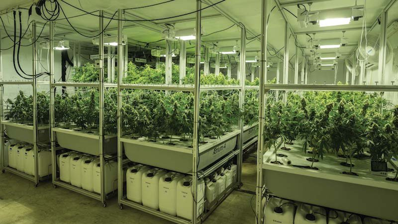 Getting Your Cannabis Grow Off to a Great Start | Cannabis Tech