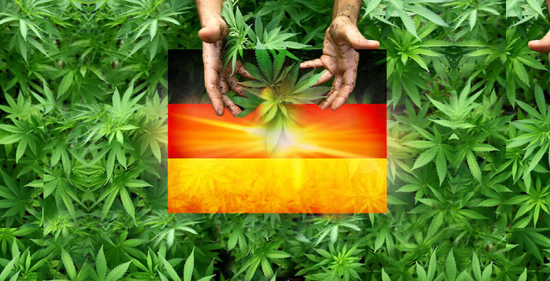 What Does The Average German Cannabis Patient Look Like? | Cannabis Tech