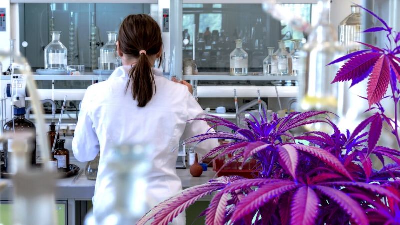 Cannabis Research - The Researchers Paving the Way
